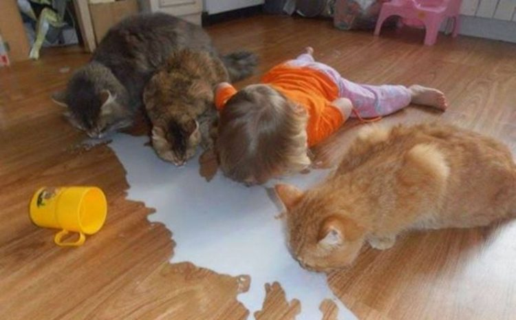 fuuny situations kids