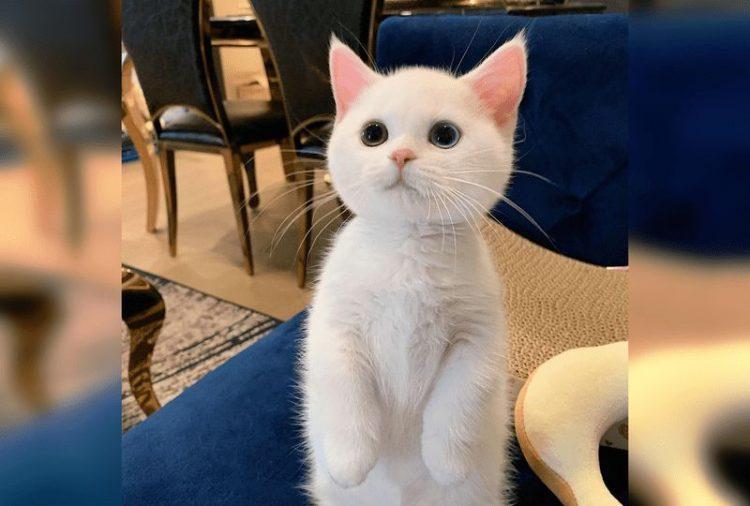 Смешные и милые котики, от которых невозможно оторвать взгляд