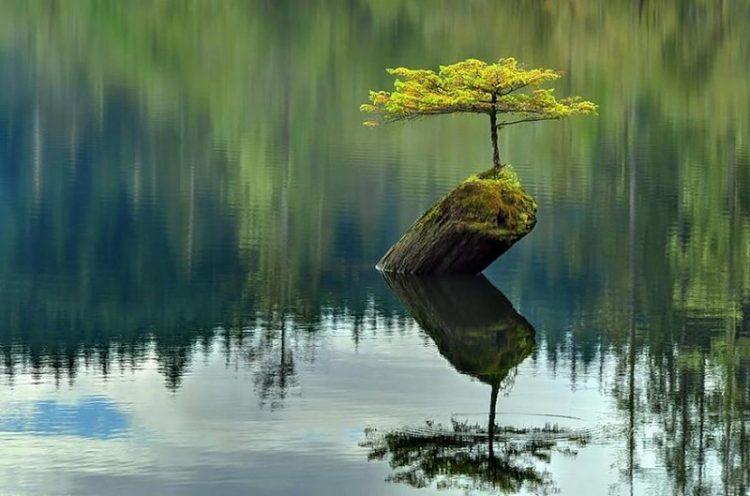 Kraft der Natur