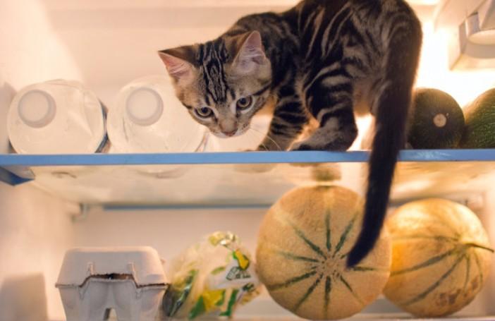 40 котов, которые оккупировали хозяйский холодильник