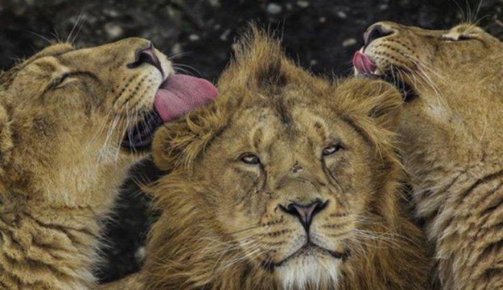 30 эмоциональных фото представителей дикой природы